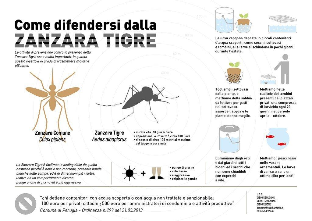 zanzare non trasmettono coronavirus